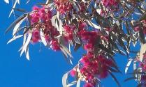 Spring in Central Australia